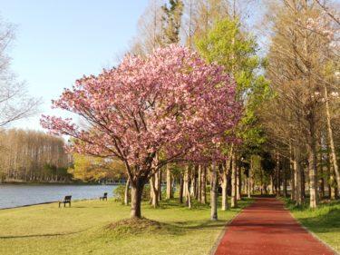 三郷公園 4月